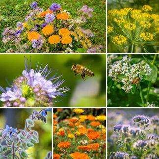 Blomsterblanding – Bieblanding