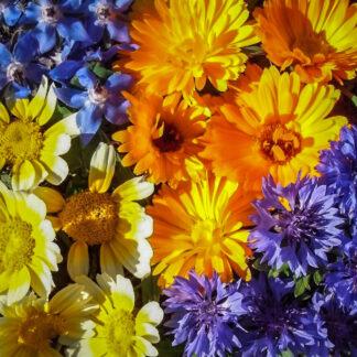 Blomsterblanding – Spiselige Blomster