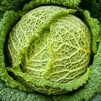 Savoykål Smaragd