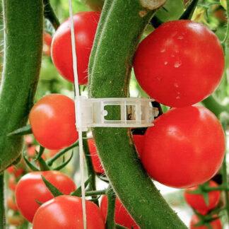 Tomat-klips