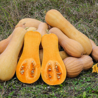 Gresskar Mini Butternut
