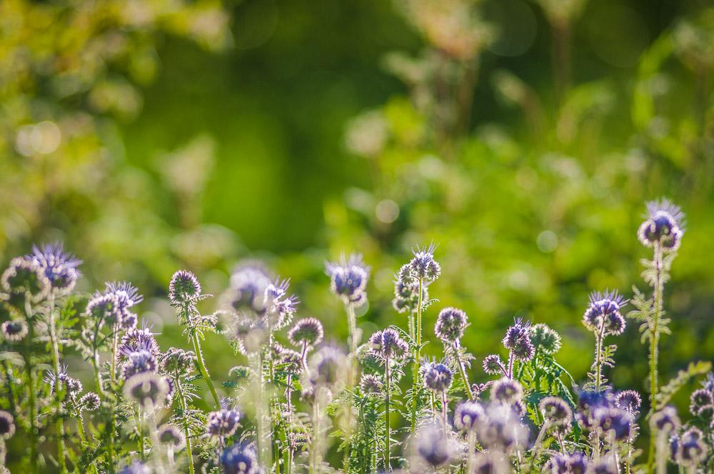Oversikt Over Bievennlige Planter