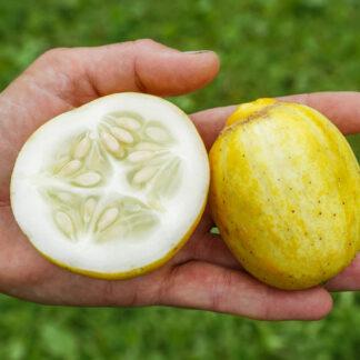 Frilandsagurk Lemon