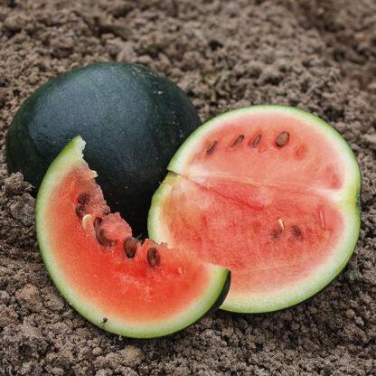 Melon Sugar Baby