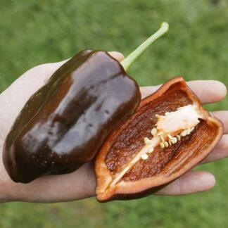 Paprika Sweet Chocolate
